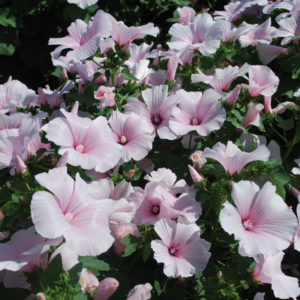 Blumen & Heilkräuter