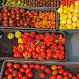 Paradeiser / Tomaten