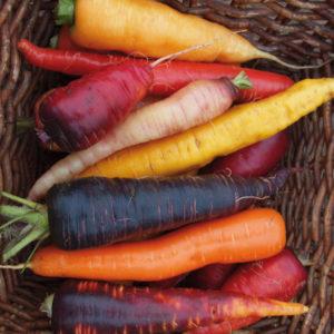 Karotten / Möhren